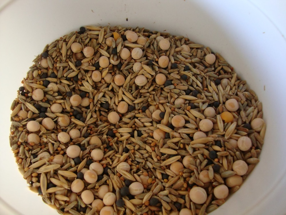Sowing a mixture of cover crops is an excellent way to enjoy a range of benefits for your garden.  This mix from Johnny's Seeds contains: Clover, Rye, Peas, Oats, and Vetch