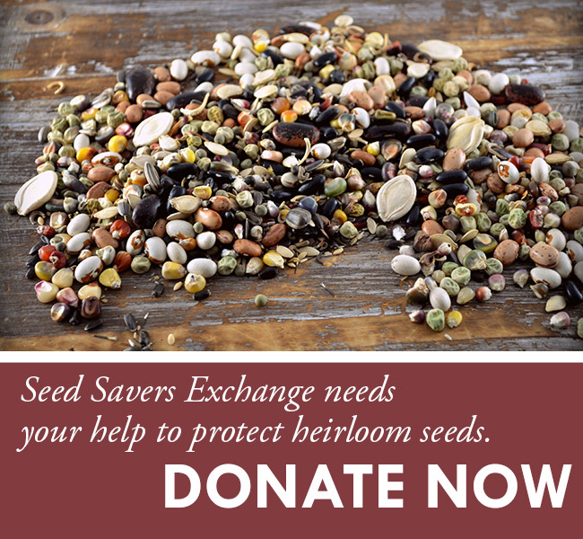 Protect-Heirloom-Seeds.jpg