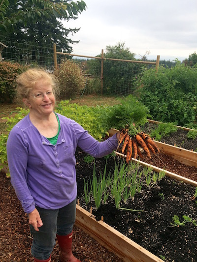 A client's late summer carrot harvest before planting Fall vegetables in her raised garden beds