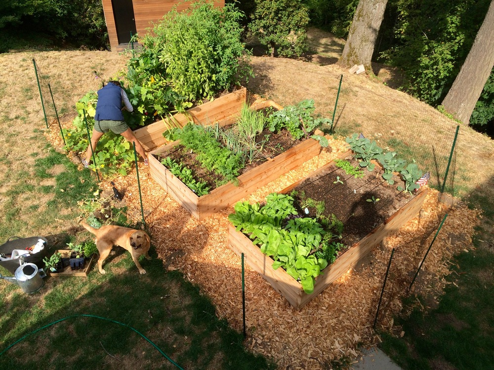 Overhead view of raised beds