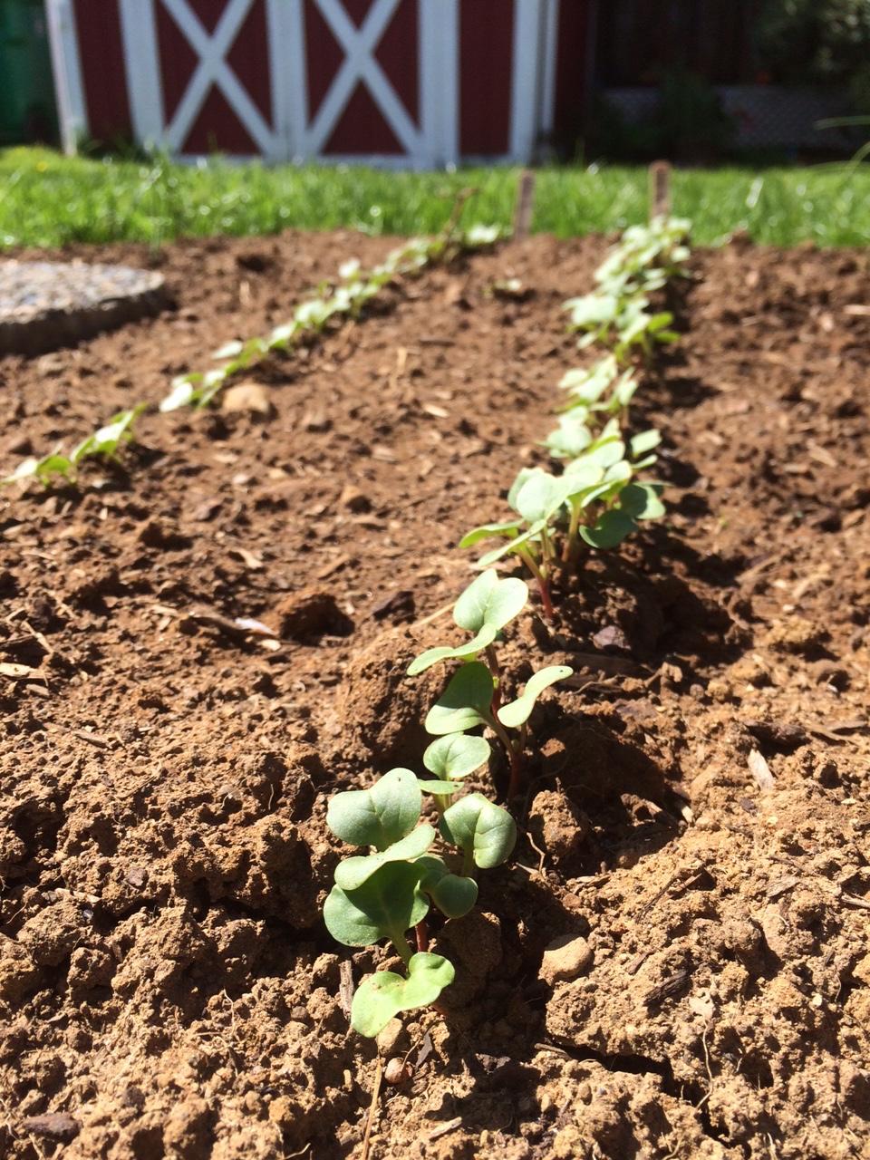 Preparing Your Soil For Planting Vegetables Portland Edible Gardens Raised Garden Beds