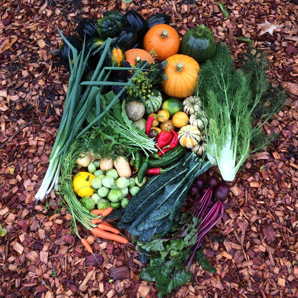garden maintenence u2014 portland edible gardens raised garden beds