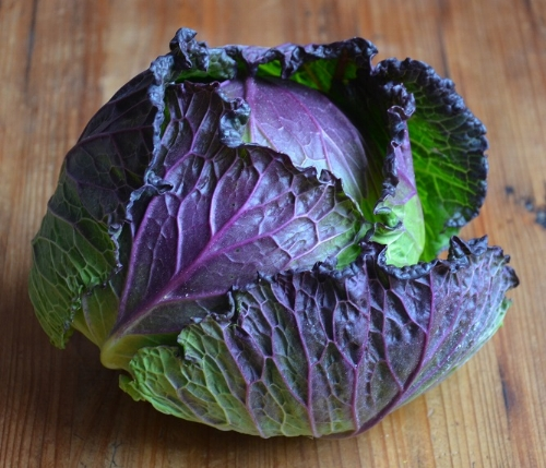 Stunning  January King  cabbage is a great choice for growing in the Winter months