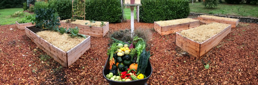 5 Hardy Vegetables For Your Winter Garden