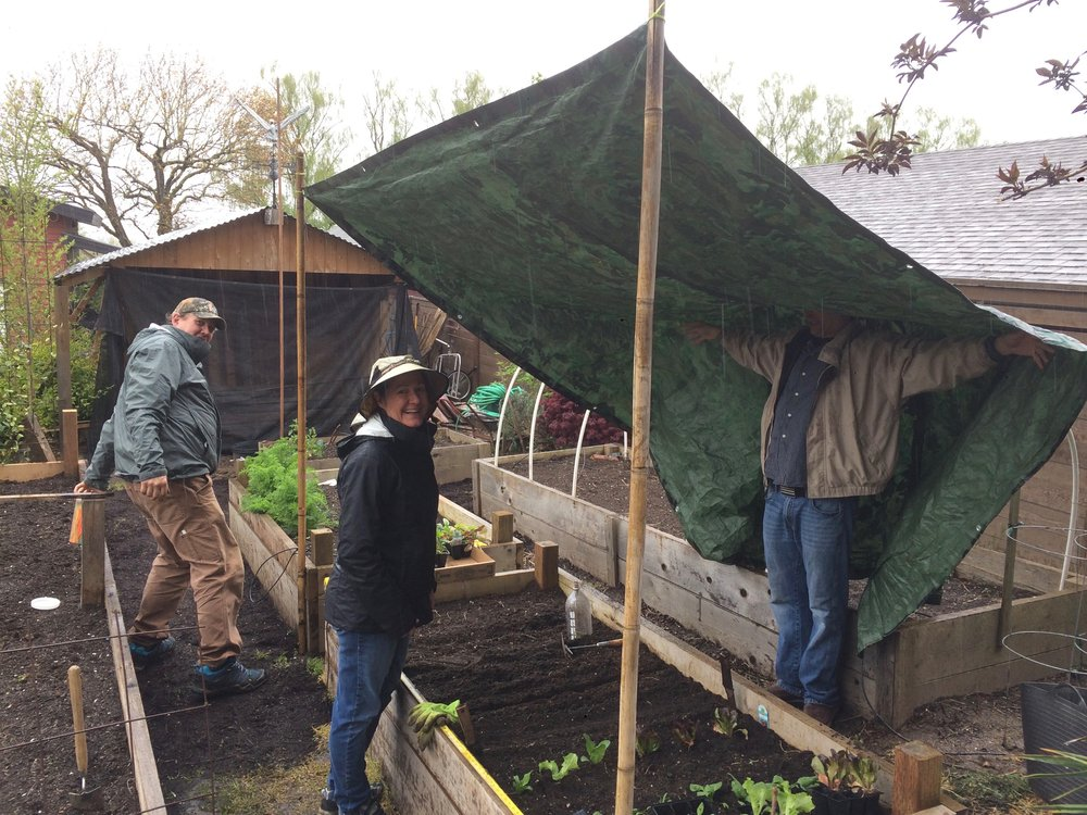 Improvising in the rain with these unflappable vegetable gardeners!