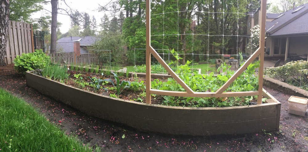 A Spring vegetable garden coming into its prime