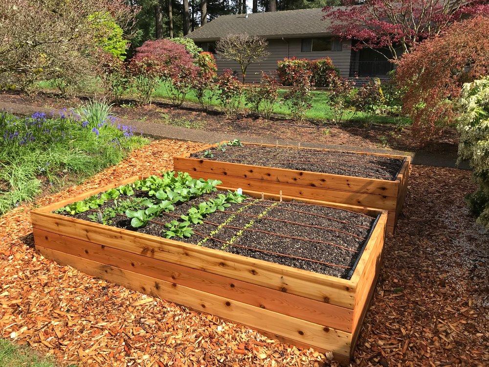 Organic Spring Vegetable Garden