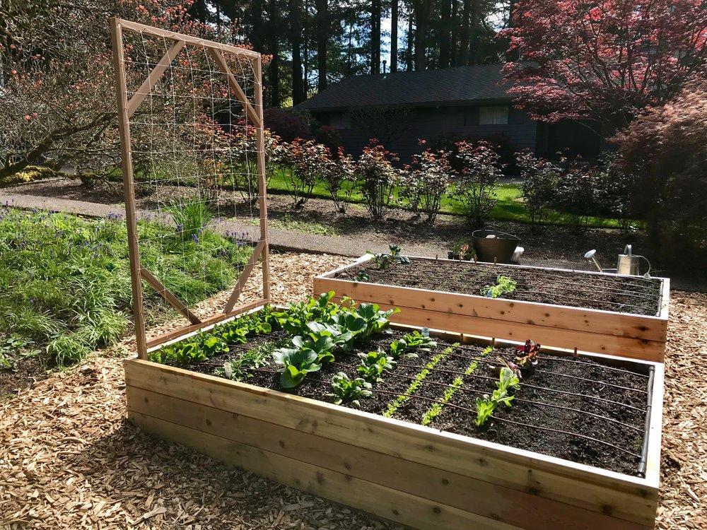 Organic Spring Vegetable Garden 2