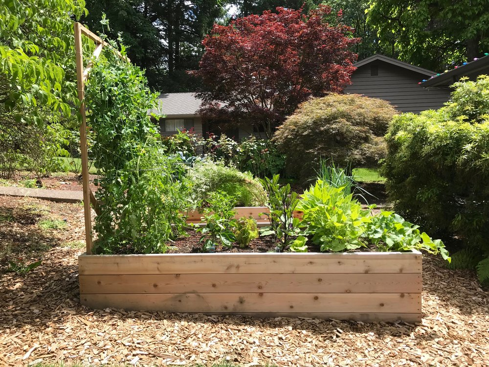 Organic Summer Vegetable Garden