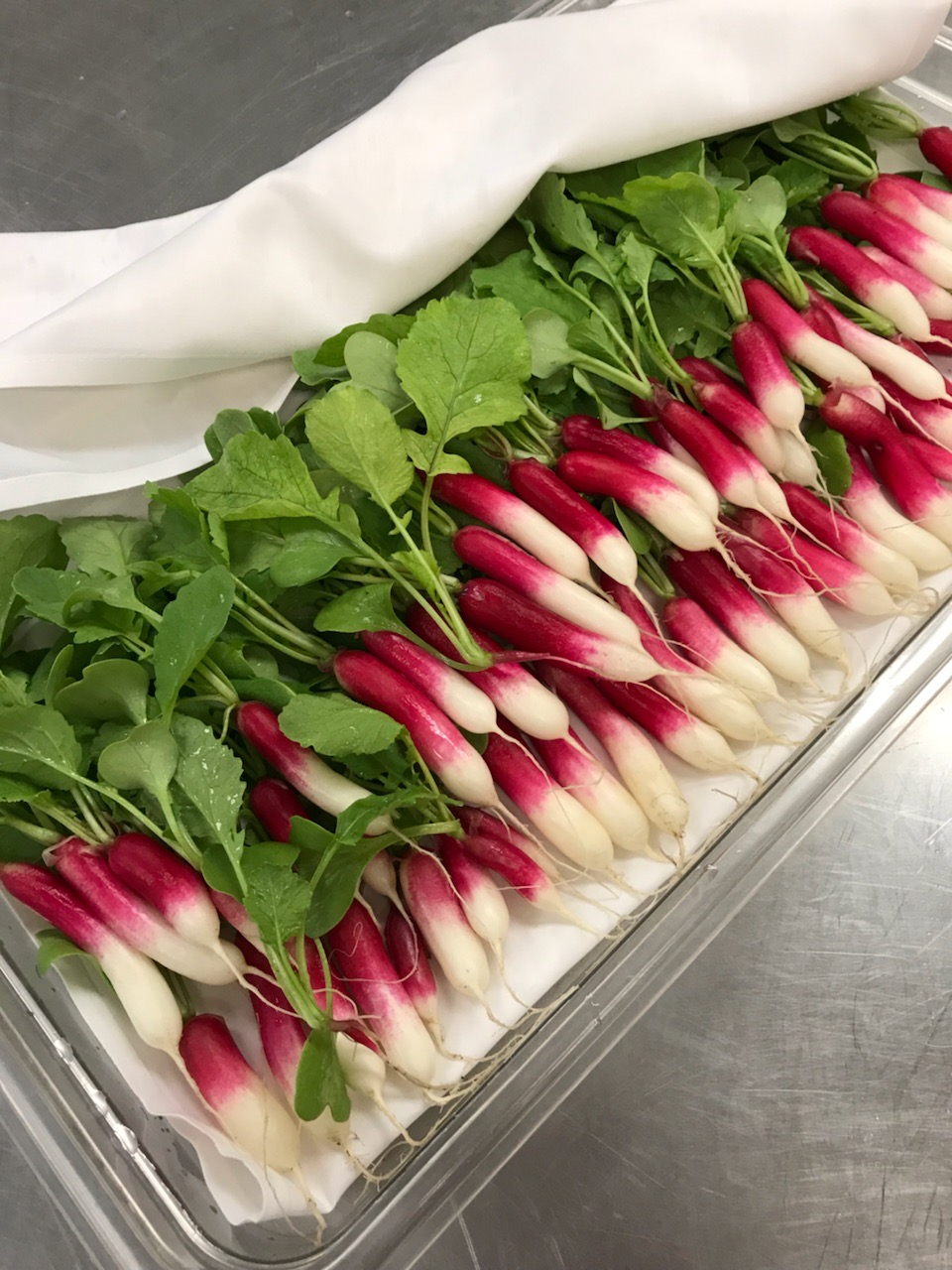 Radish harvest in the Waverly kitchen