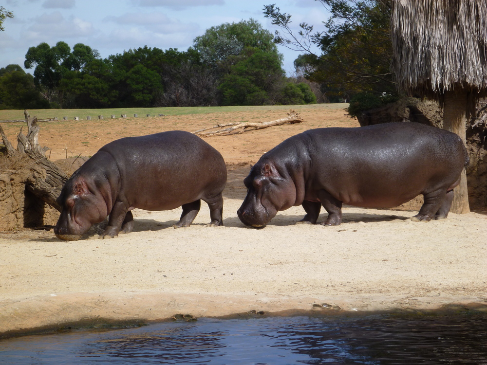 Werribee Zoo - Mamma Knows West