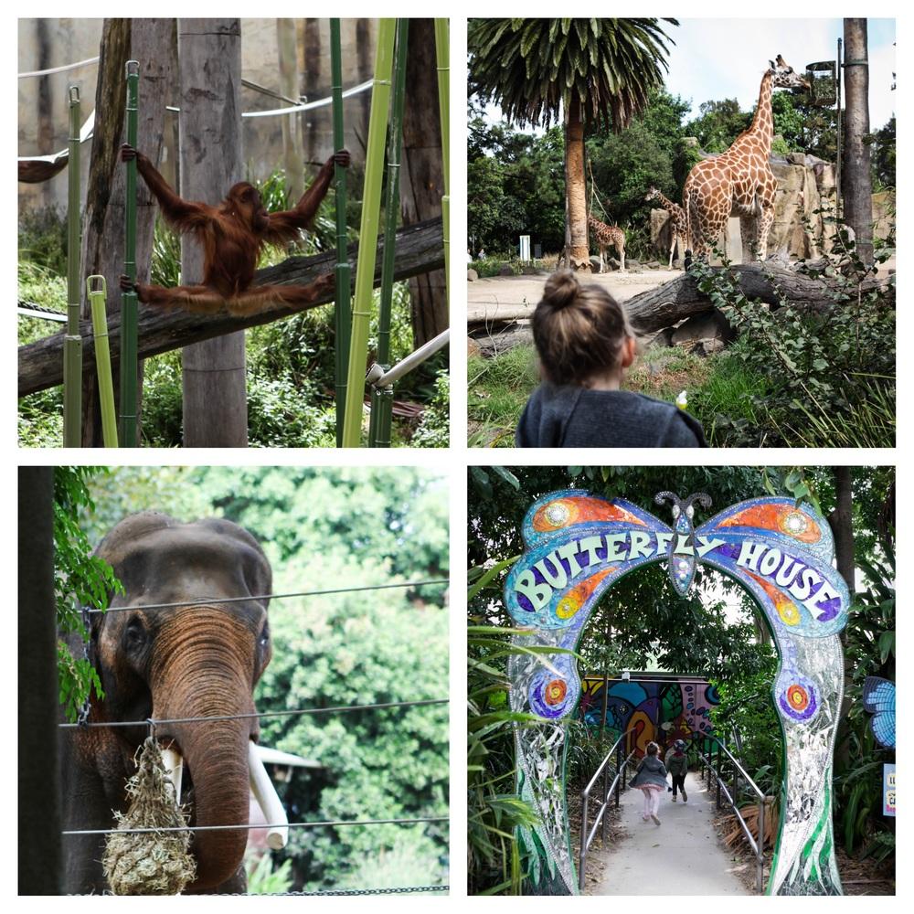 zoo coll 2.jpg