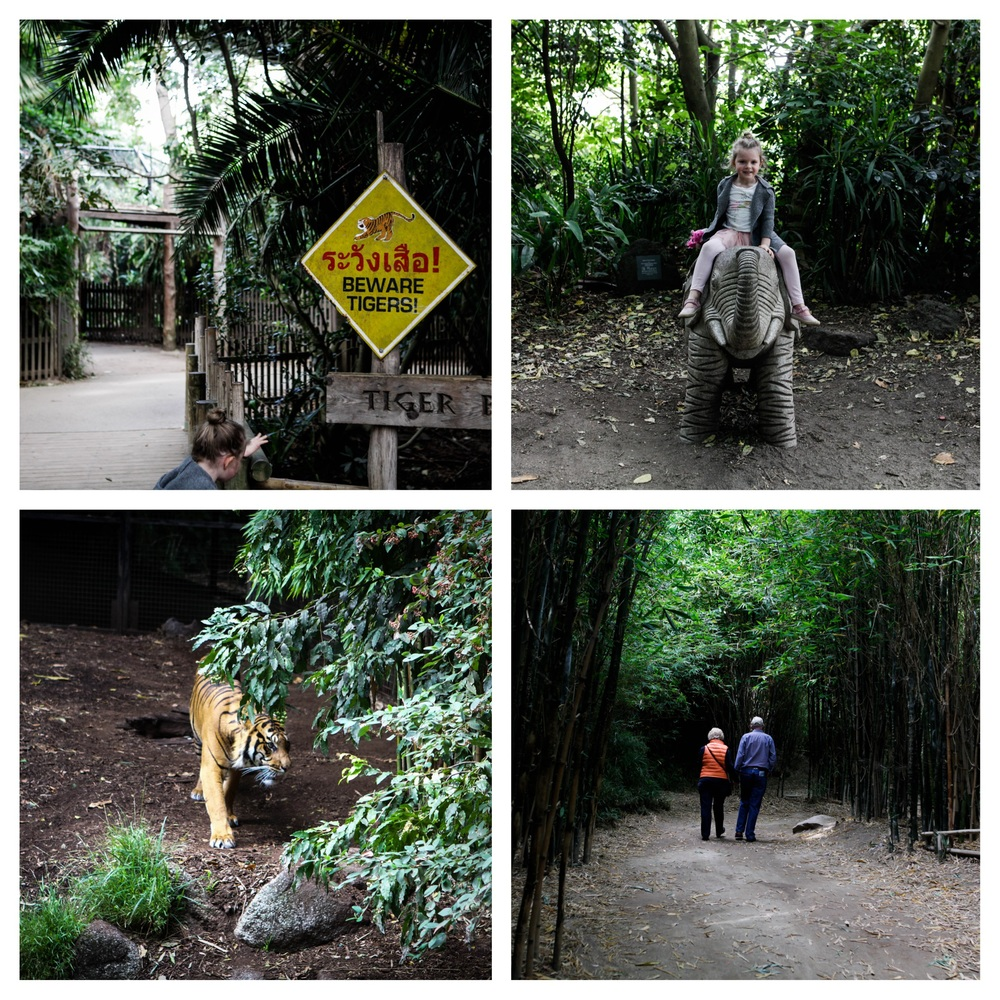 zoo coll 1.jpg