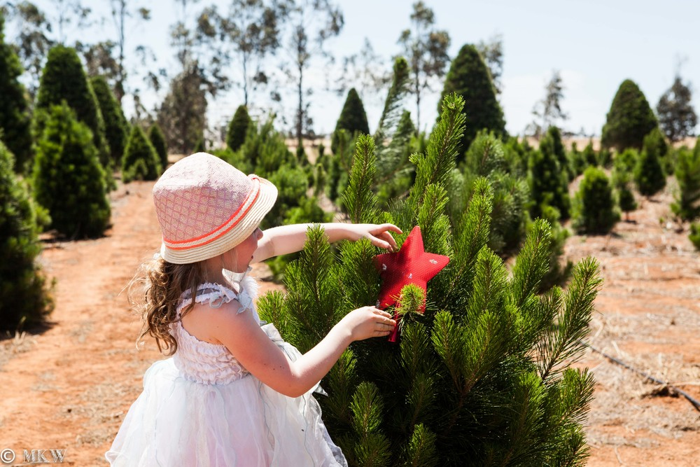 melbourne christmas tree farm - mamma knows west