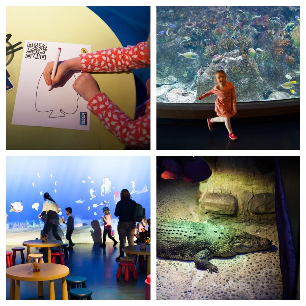 aquarium coll 2.jpg