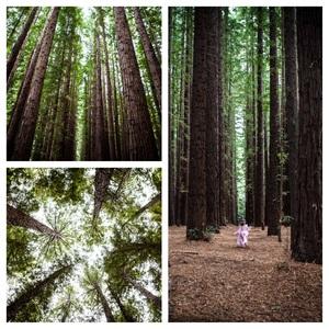 redwood+coll+3.jpg