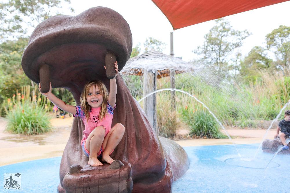 Hippo Beach Werribee Zoo - Mamma Knows West (25 of 14).jpg