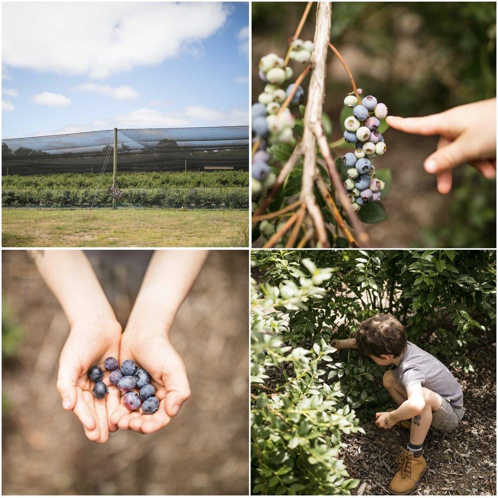 blueberries 2.jpg