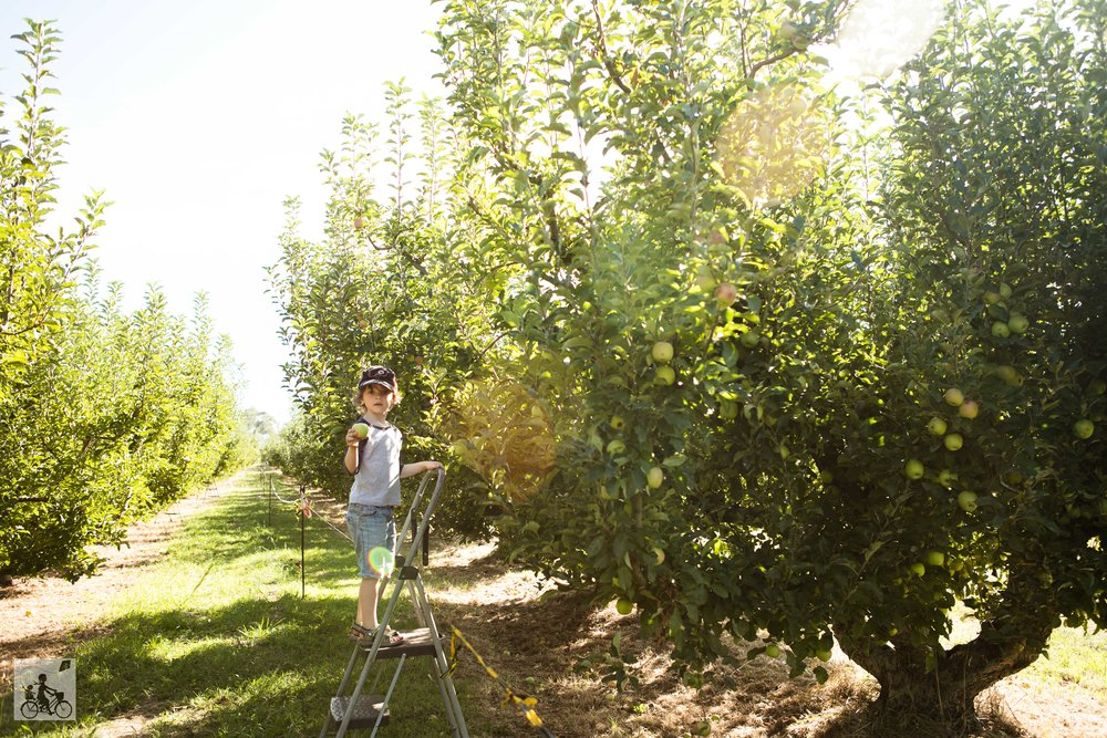 Paynes Orchards, Bacchus Marsh