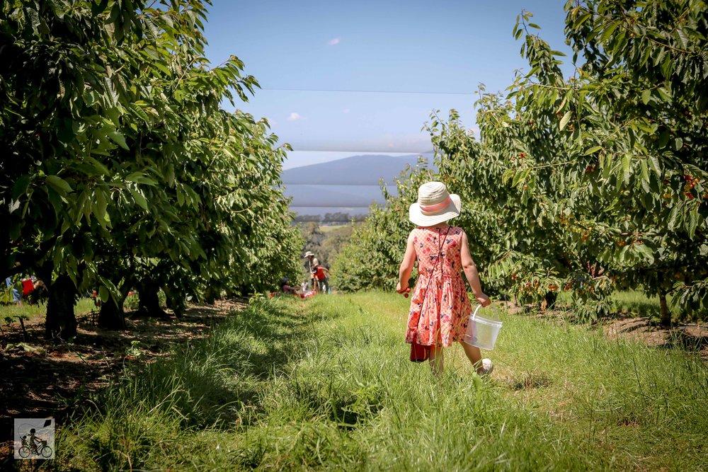 Cherryhill Orchards, Wandin East