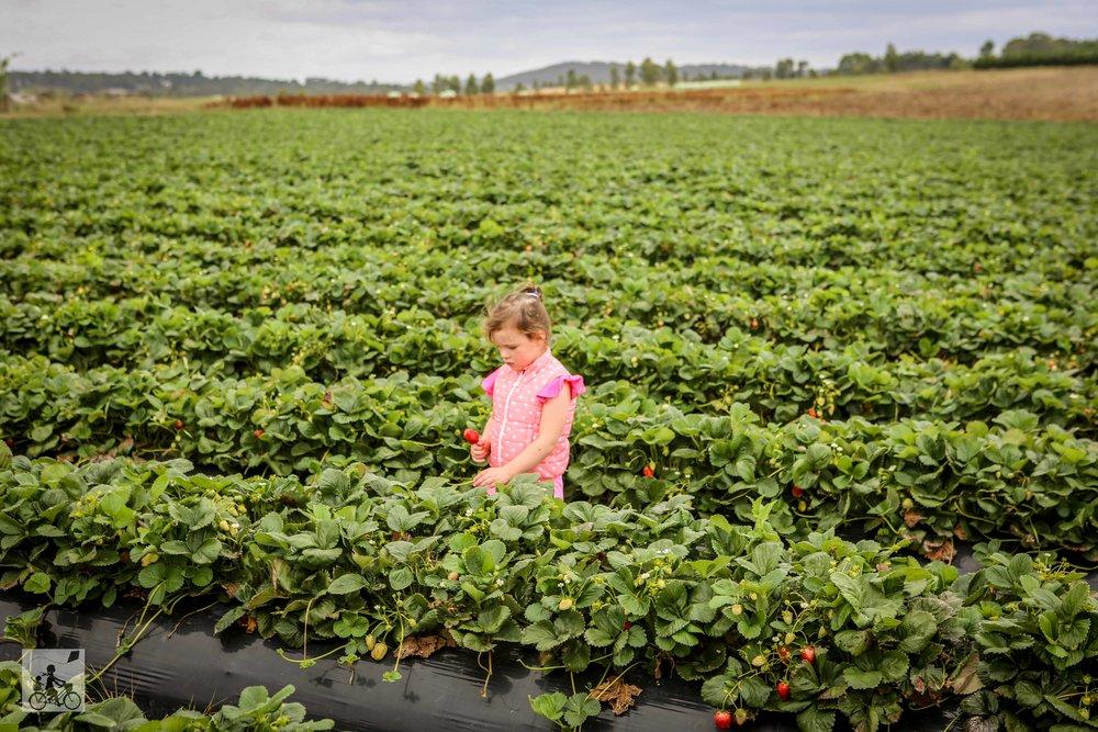Farmer's Market Pick, Coldstream