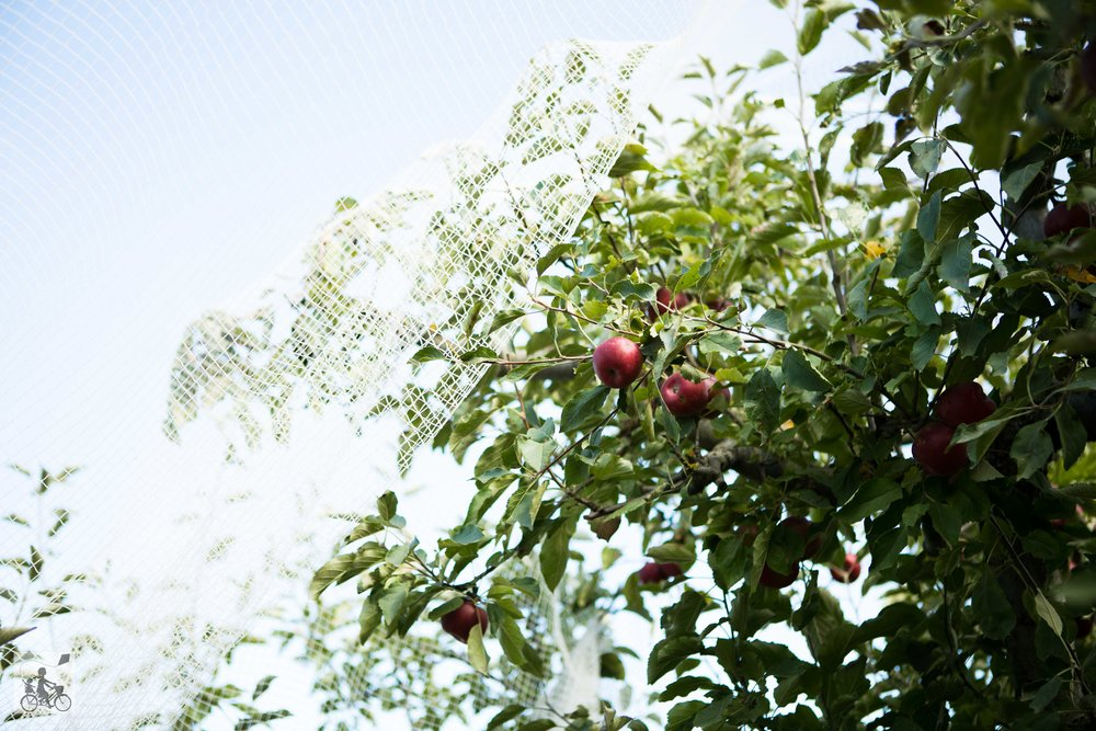Paynes Orchards Mamma Knows West (8 of 24).jpg