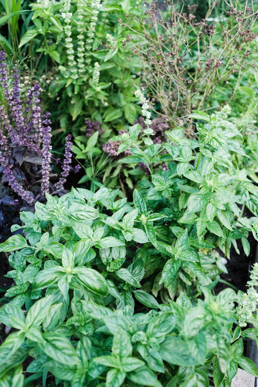 herb_garden_tea_tLBCC-5.jpg