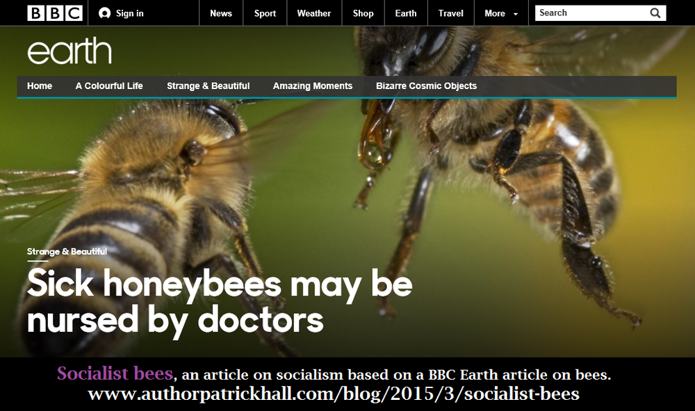 Click the image for the article on bees on BBC Earth's website.