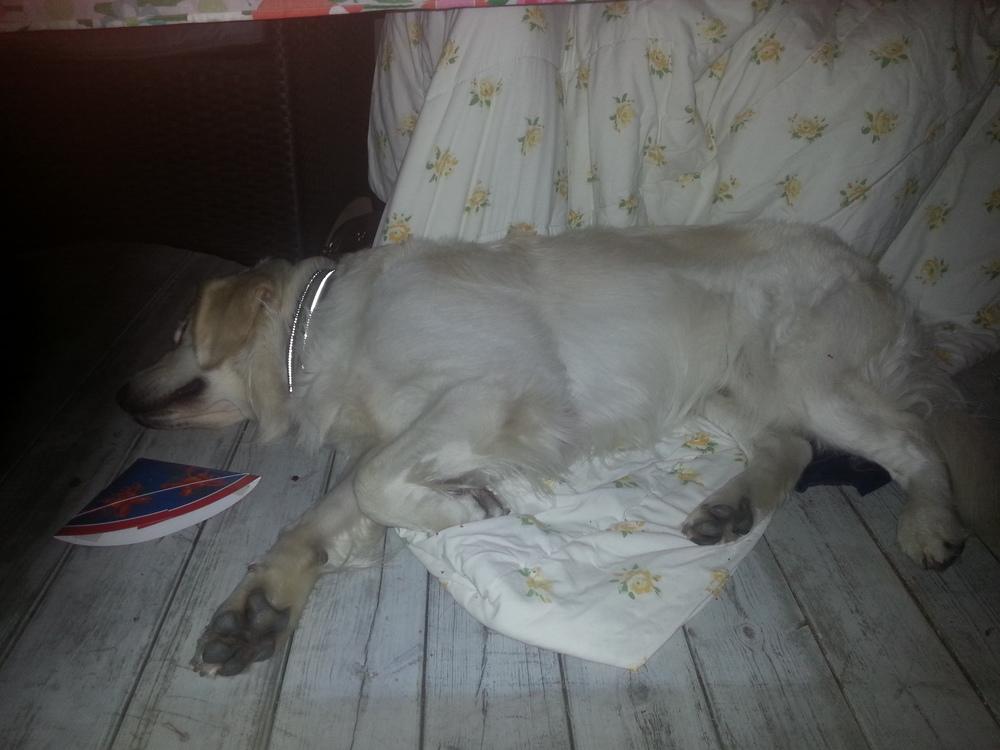 The sleepy dog 3