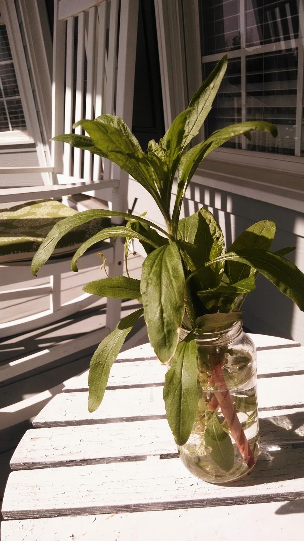 john's plant