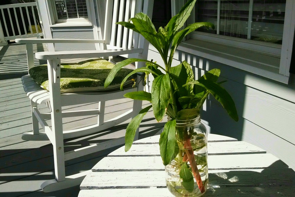 bubba's plant on porch