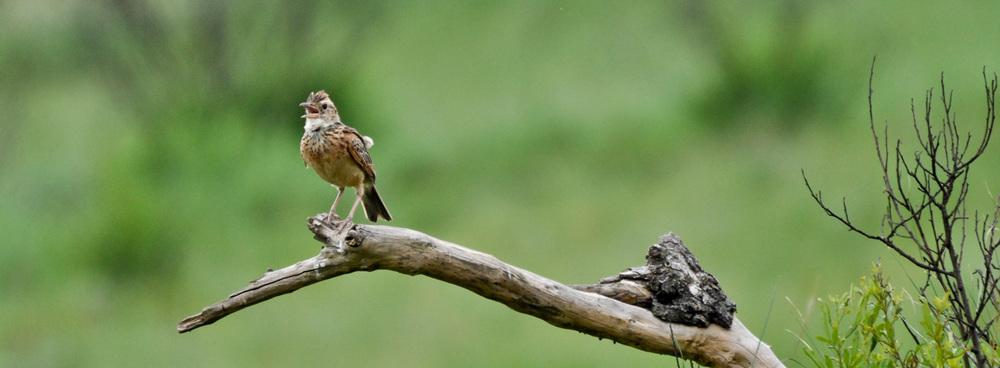 Noisy Bird!