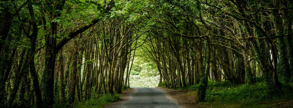 Through the trees...