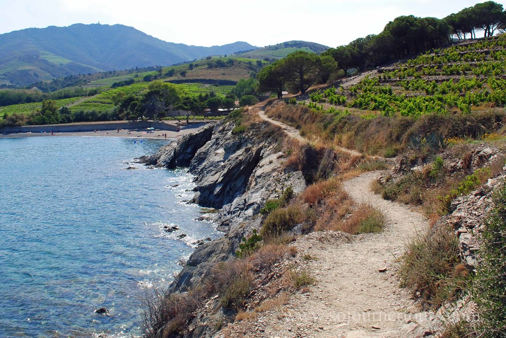 Vineyards along the coast