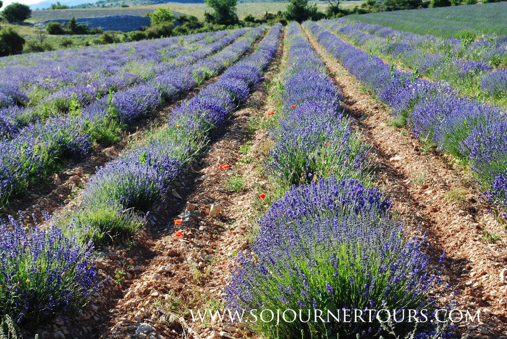 France du Sud 2011 083.jpg