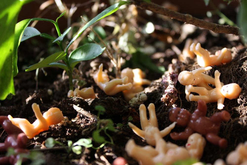 """Jungle Babies"""