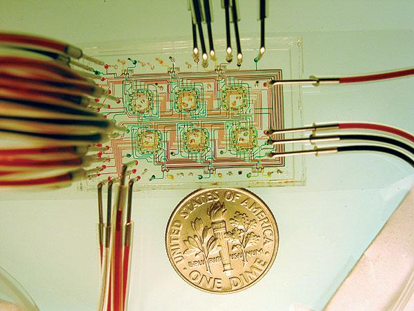 Microfluidic chemostat used to study microbes