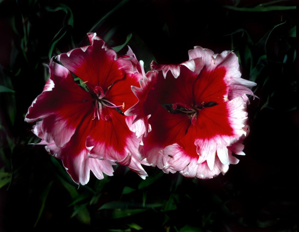 2 ants 2 flowers 4x5.jpg