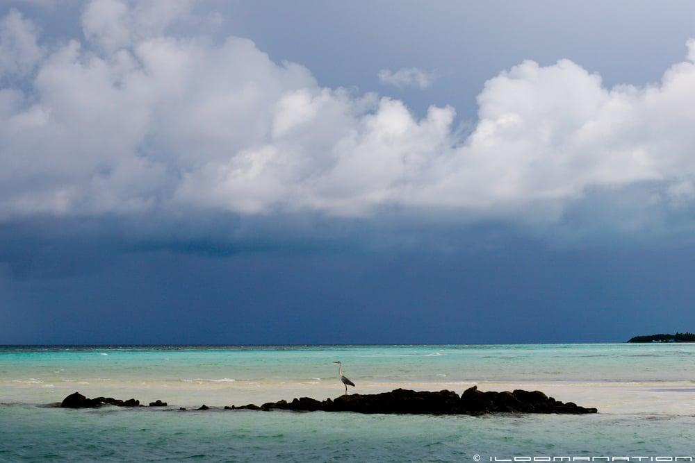 maldivestwo-288.jpg