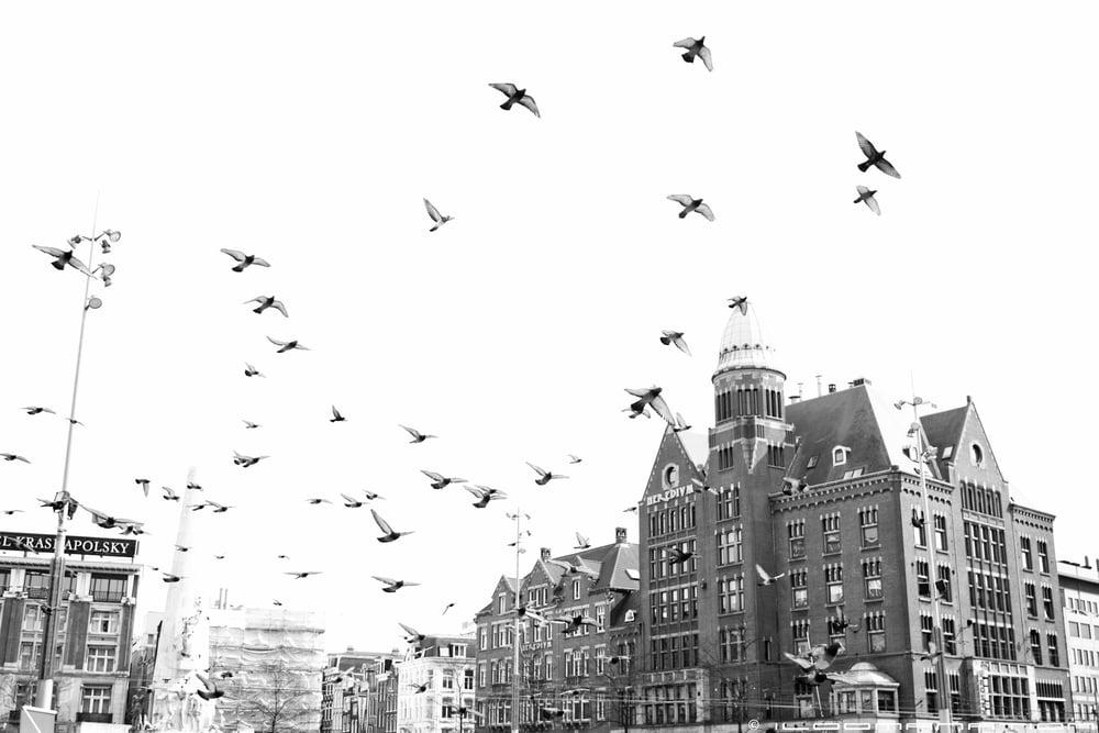 portugal-amsterdam-118.jpg