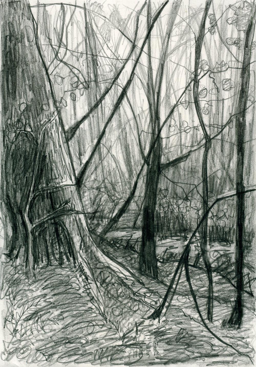 treesketchpencil002web.jpg