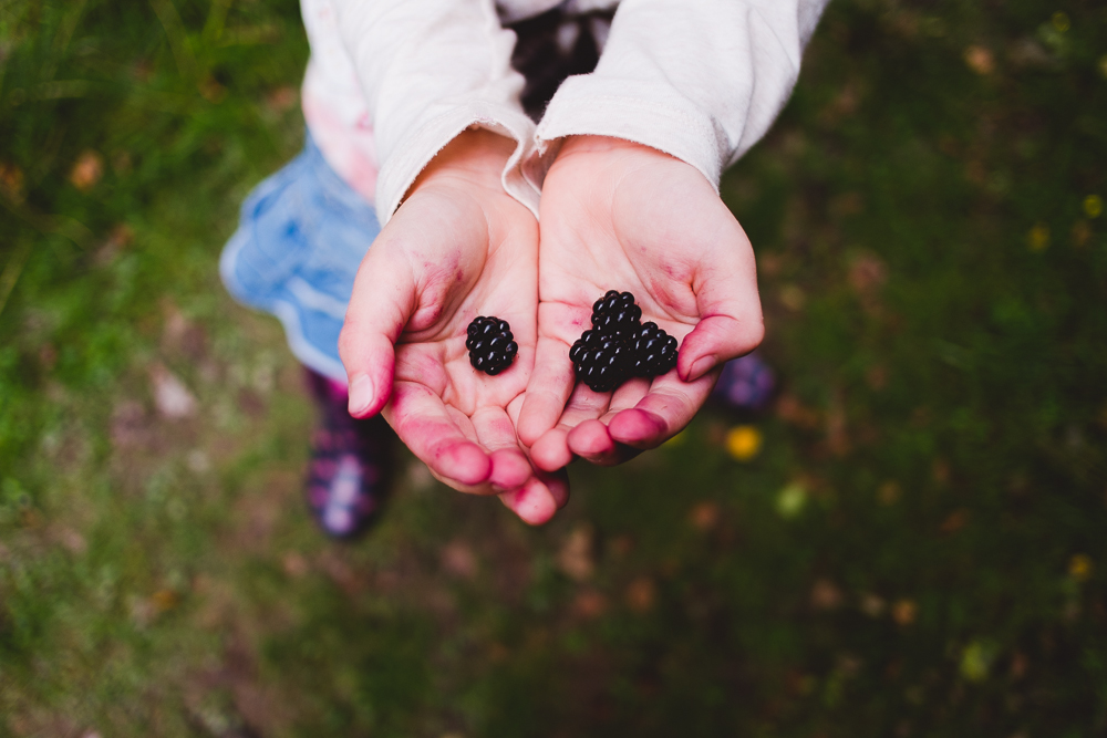 Blackberry picking. © Andrew Newson