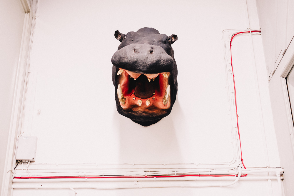 Hippopotamus © Andrew Newson