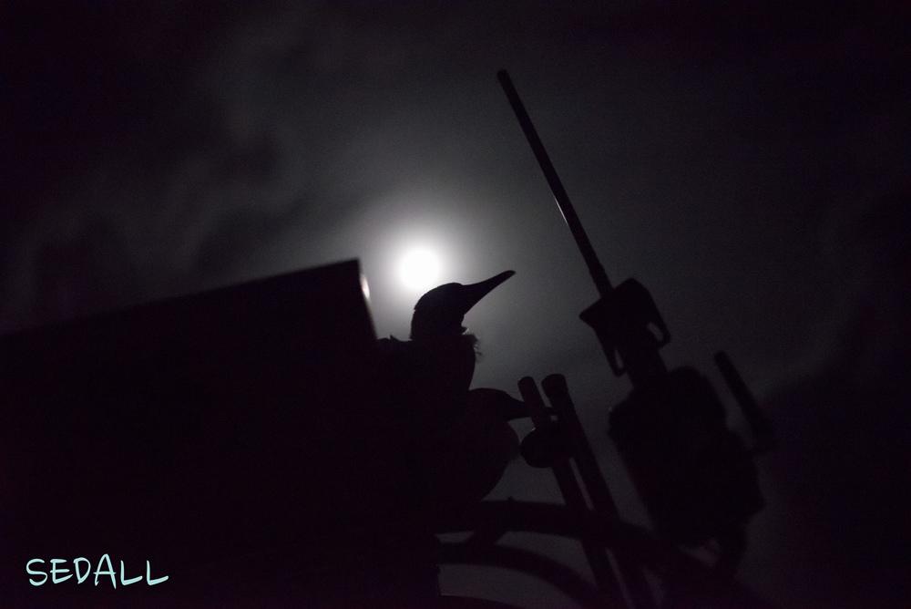 02_SueDall_01_NightPhotography.jpg