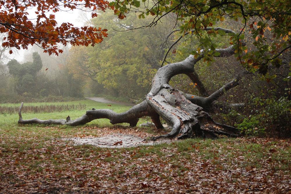 EthelMercedes_01_Landscapes.jpg