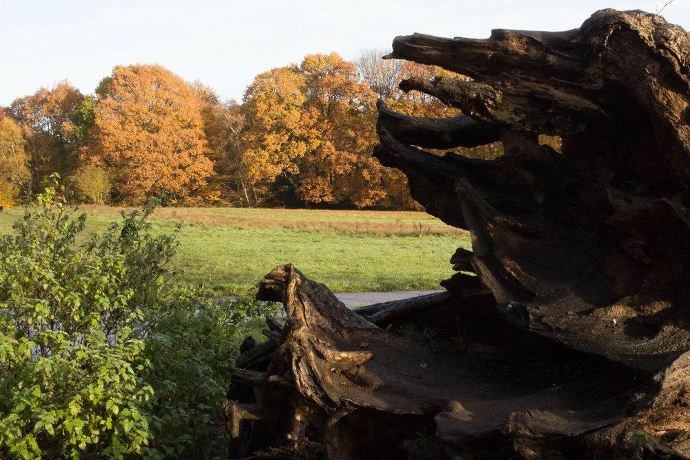 EthelMercedes_04_Landscapes.jpg