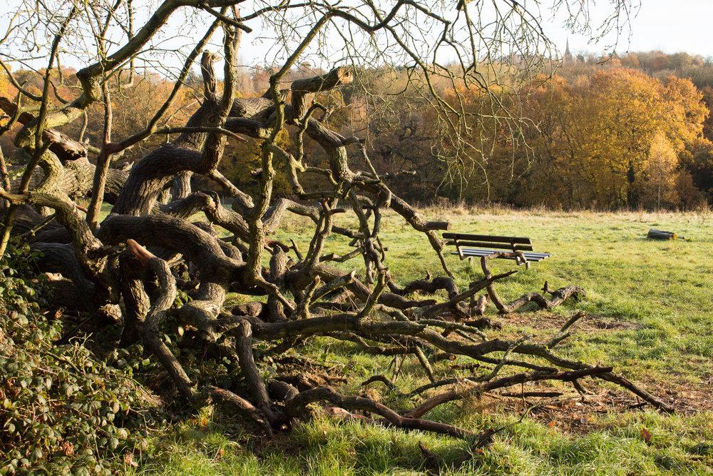 EthelMercedes_05_Landscapes.jpg
