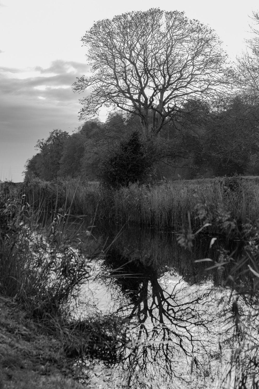 LizBisson_02_Landscape-2.jpg