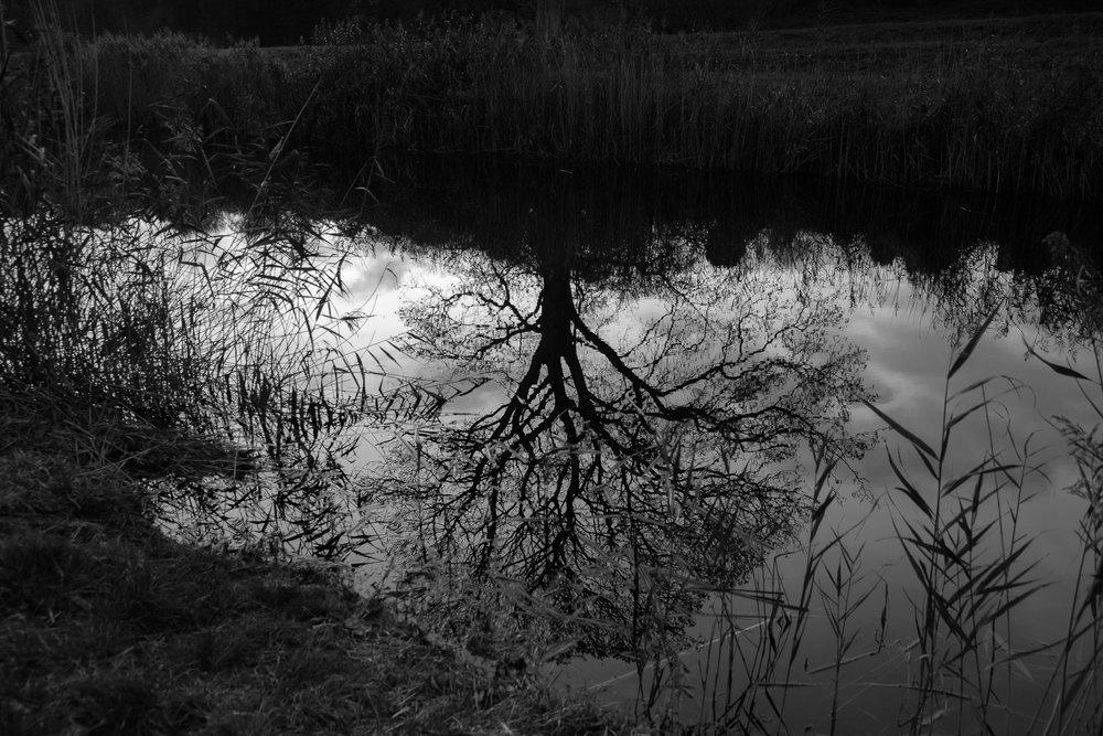 LizBisson_03_Landscape-3.jpg