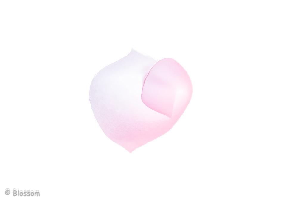 BlossSpink_02_whitepaper.jpg